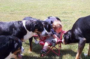 Greater Swiss Mountain Dog Pack
