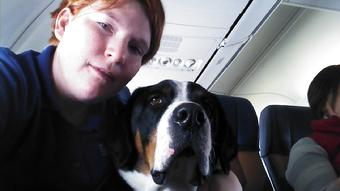GSMD flying in airplane as a Service dog