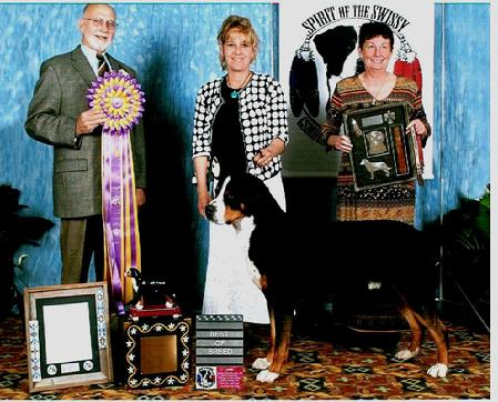 Greater Swiss Mountain Dog, Swissies, AKC, here in Michigan