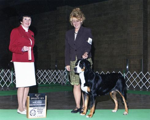 GCh. Ch. Wildest Dream Intangible (Tangee) becomes a Grand Champion in Indiana.  Tangee is a Greater Swiss Mountain Dog from Wildest Dream Swissies here in Michigan.  We are currently having a litter of Greater Swiss Mountain Dog Puppies.