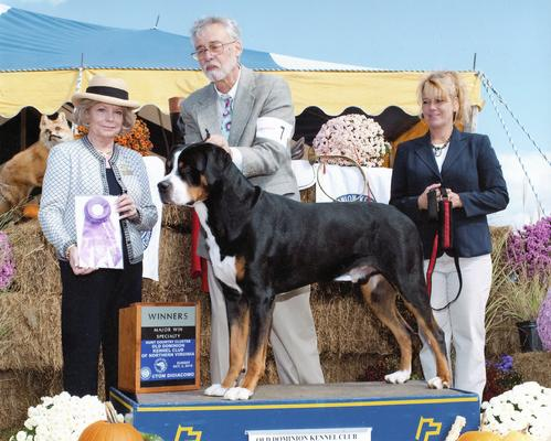 Ripley becomes a champion winning in 5 pt majors at two specialties on the East Coast, many dogs from North Carolina, Washington area, Virginia, Maryland, West Virginia, and Boston were there to compete